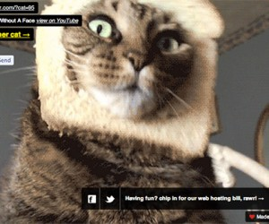 Procatinator: The Furry Feline Backbone of the Internet
