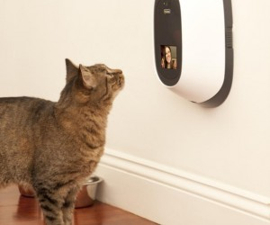 Say Hello and Give Your Pet Treats Remotely with PetChatz