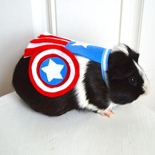 Superhero Rodents