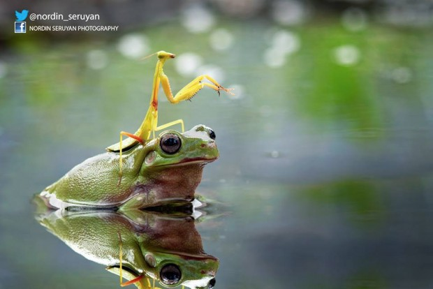 frog_mantis