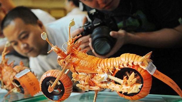 lobster art2