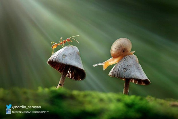 snail_ant