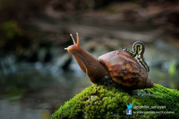 snail inchworm 620x414
