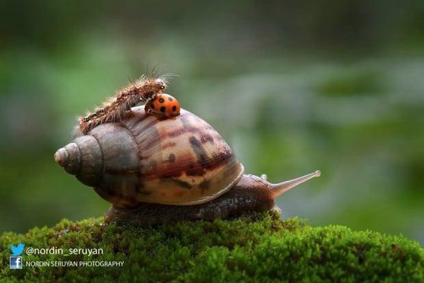 snail ladybug 620x414