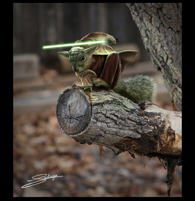 superhero squirrel yoda
