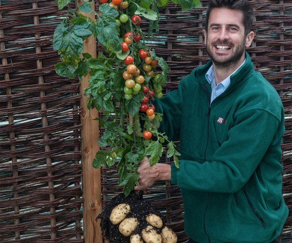 This is a Potatomato Plant: You Say Potato, I Say Tomato…