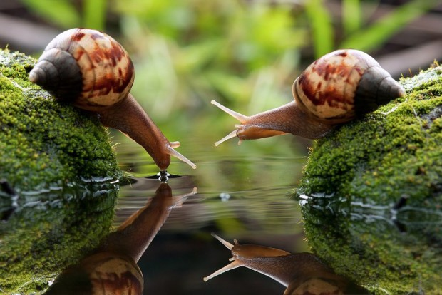 two snails 620x414