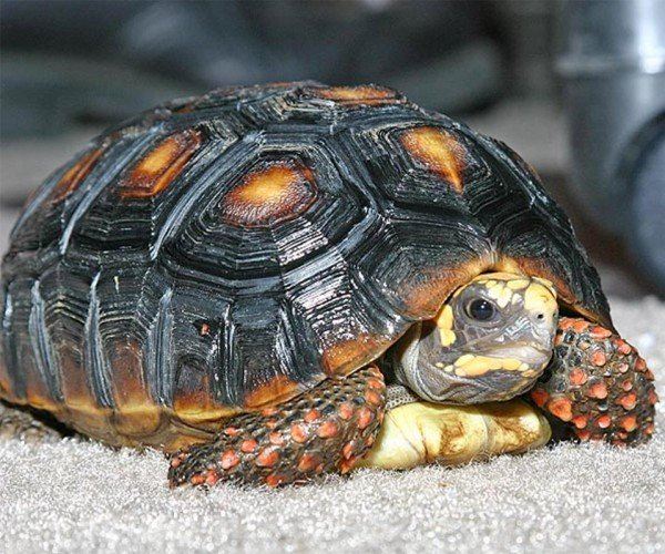 Turtle Missing for 30 Years Found in Locked Storage Room – Alive!