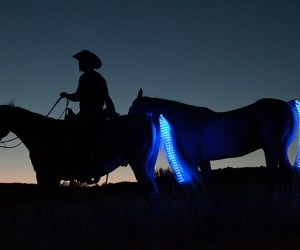 LED Strips for Horses: Tail Lights