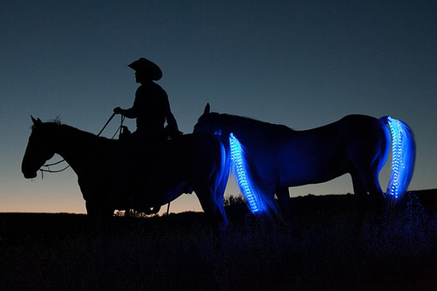 tail lights LED strip for horses by sami gros 620x413