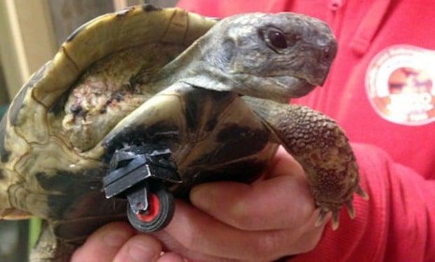 turtle lego 620x374
