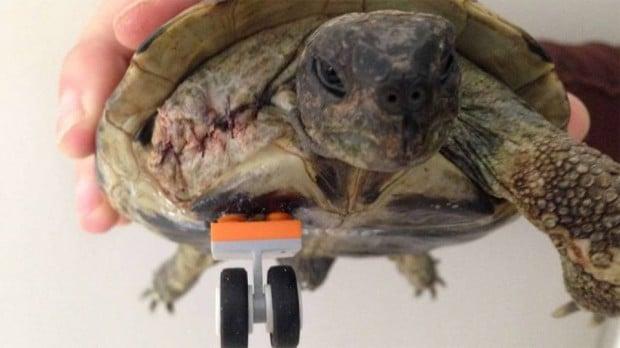 turtle lego leg 2 620x348