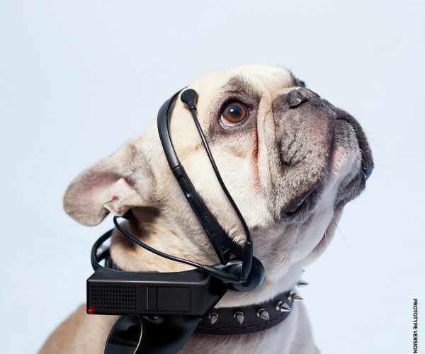 No More Woof Wants to Translate Dog Thoughts into English… Seriously