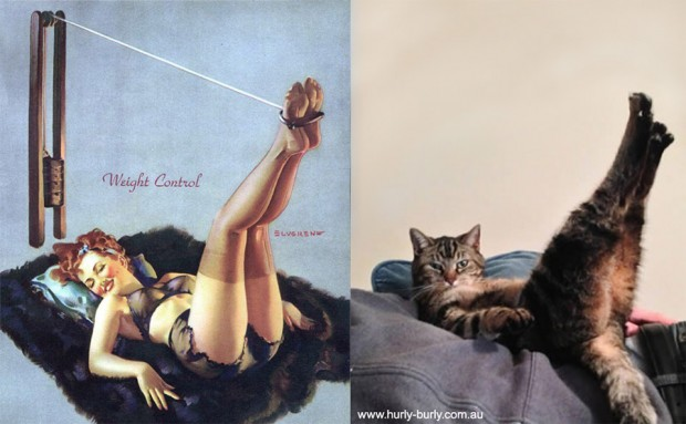 pin up cats 2 620x383