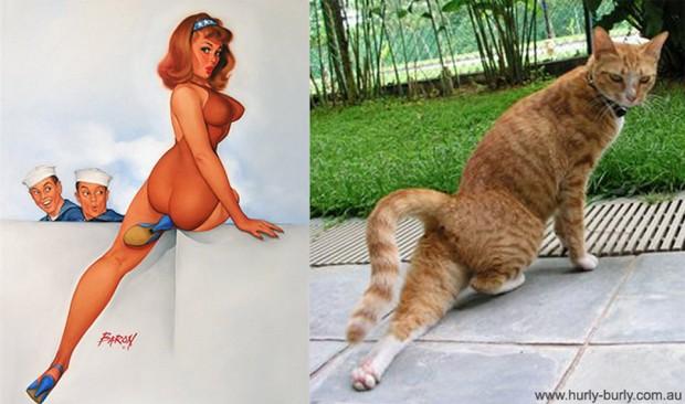 pin_up_cats_5
