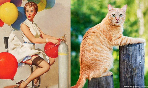 pin up cats 6 620x367
