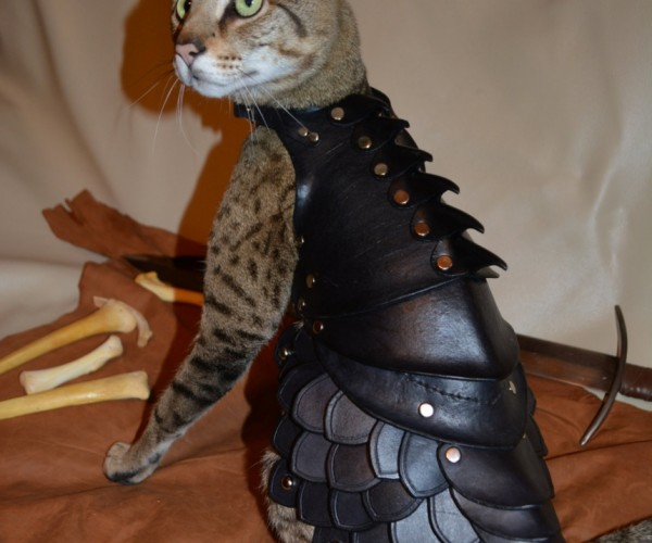 Mew-dieval Cat Battle Armor Gives Cats Ten Lives