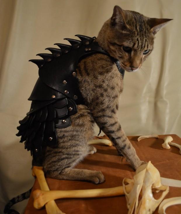 cat armor1