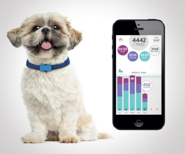 FitBark Lets You Track Your Pooch's Daisy Activities