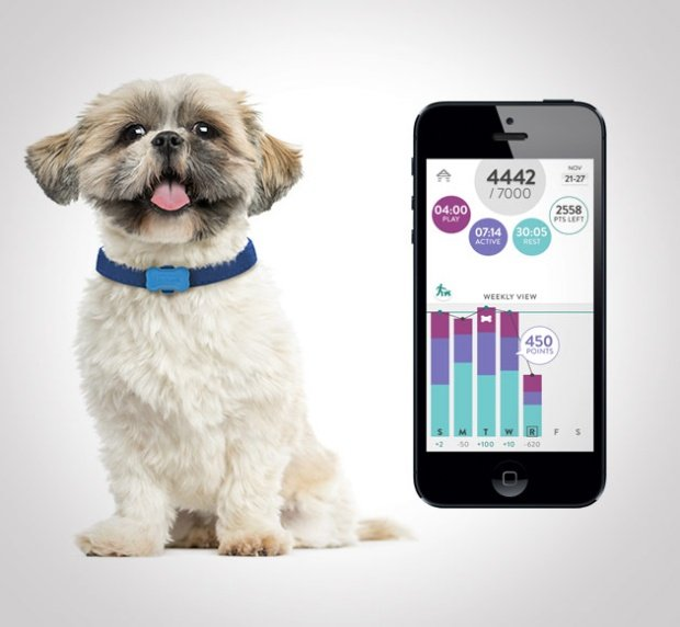 Pet wearables: Track activity until the cows come home (literally)