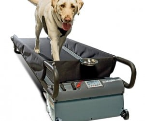 Doggie Treadmill: Run Spot Run