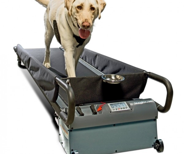 Doggie Treadmill: Run Spot Run