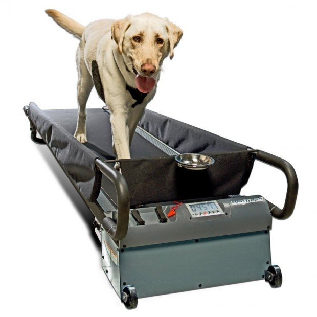 dog treadmill 620x620