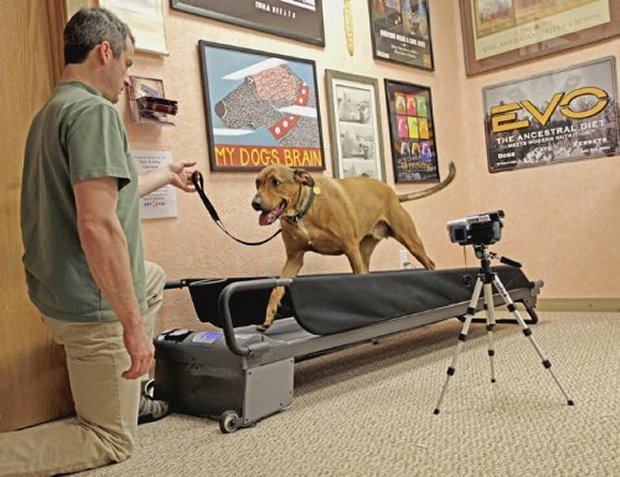 dog treadmill1
