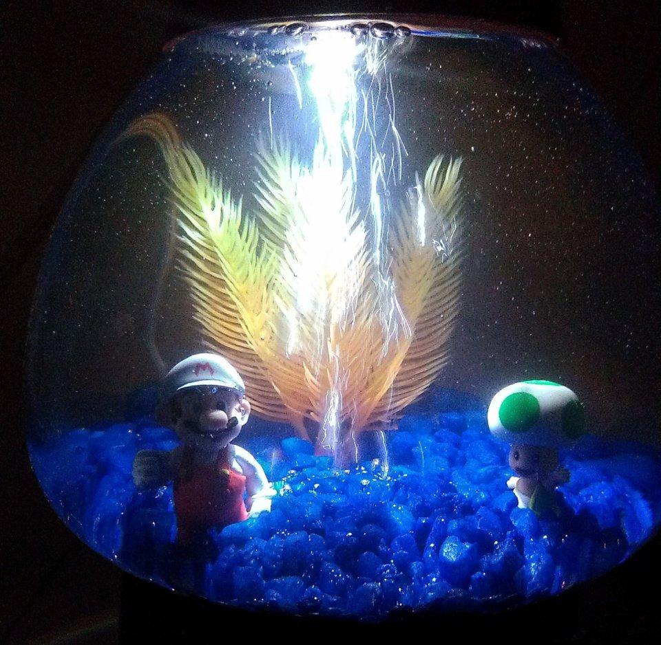 Super Mario Gumball Machine Aquarium: Do Mushrooms Grow Underwater?