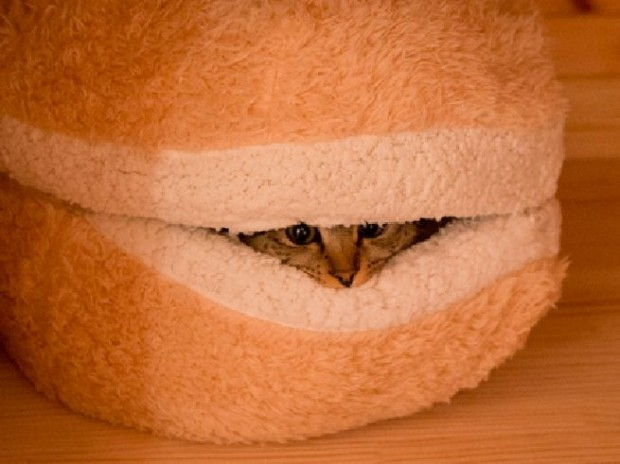cat burger pillow2 620x464