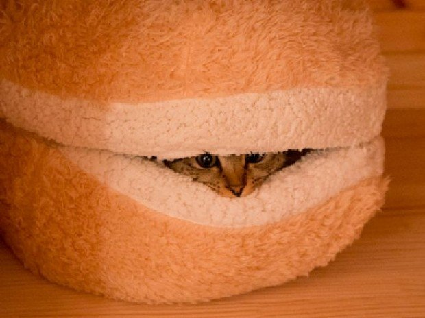 cat burger pillow2
