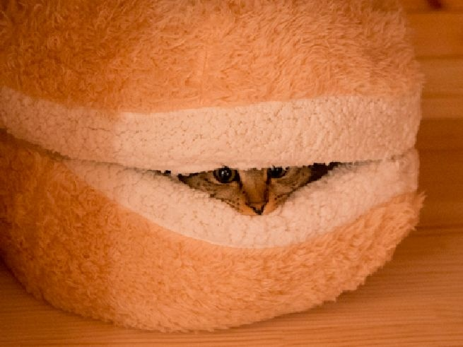 I Can Haz This Cat Burger Pillow