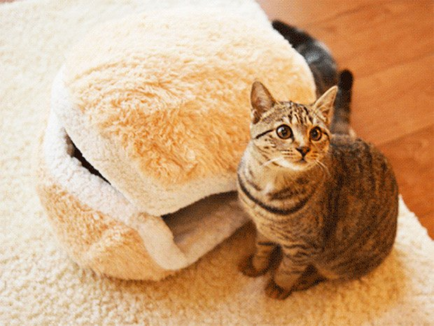 cat burger pillow 2