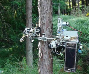 This Tree-Pruning Robot Wields a Chainsaw