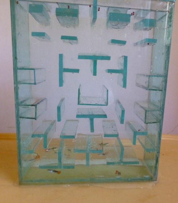 pac man fish tank 620x707