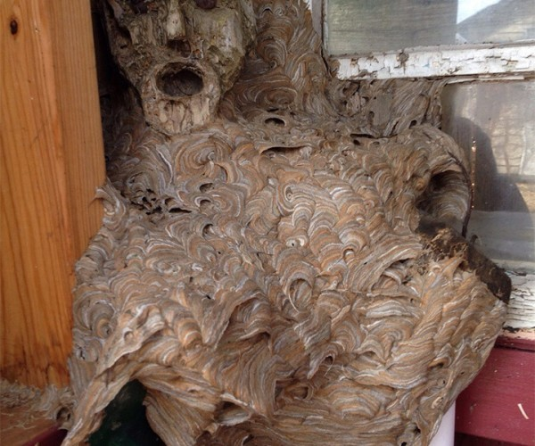 Hornet's Nest + Human Sculpture = A Lifetime of Nightmares