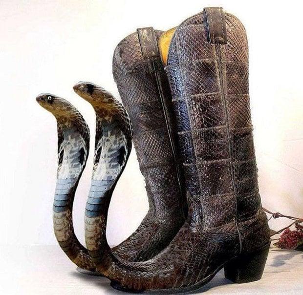 cobra boots