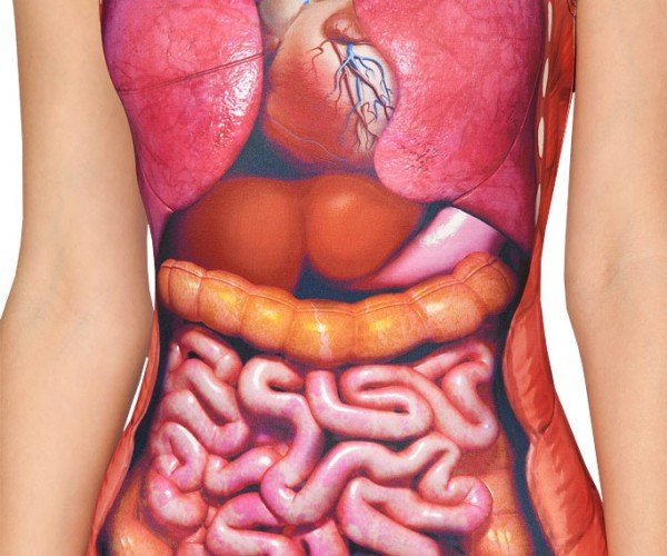 Internal Organs Swimsuit: The Visible Model