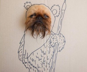 Shih-tzu Ewok won't Crush Your Head with Giant Logs, but May Leave Them on the Floor