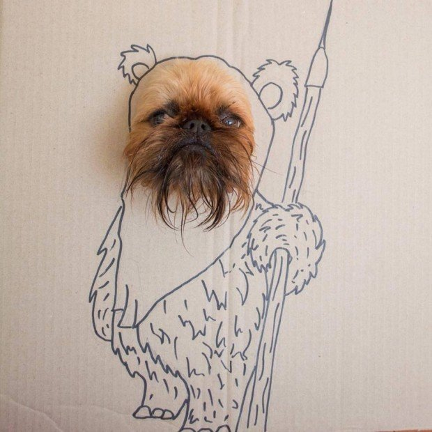 ewok_terrier_dog