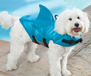 Shark Fin Life Jacket for Dogs: Steven Spielberg's PAWS
