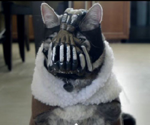 Bane Cat 2: The Dark Cat Rises