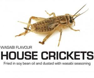 bug 4 300x250