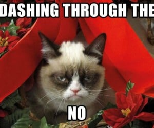 Grumpy Cat Holiday Special Heads to Lifetime