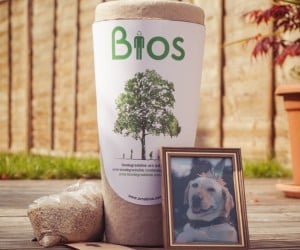 Biodegradable Pet Urn Tree Kit: From Death, Comes Life