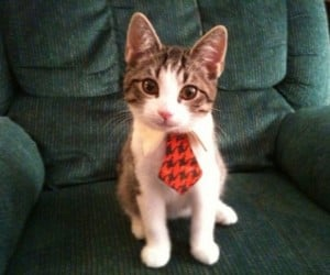 A Spiffy Tie for Your Very Own Business Cat