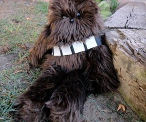 Chewbacca Plush Toy: Awww… Wook at the Wittle Wookiee