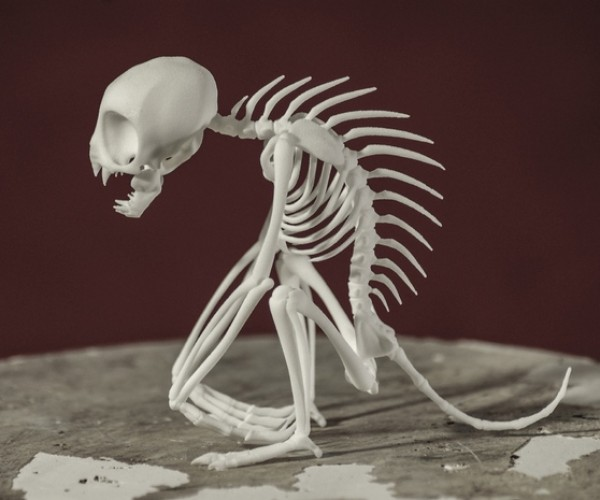 Chupacabra Skeleton: Finally, Scientific Proof!