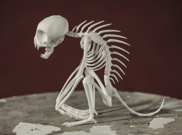 chupacabra skeleton