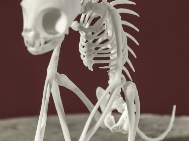 chupacabra skeleton1